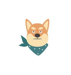 angry shiba inu dog head isolated on white vector image