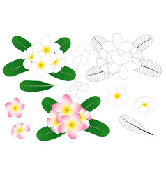 plumeria outline vector image vector image