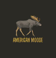 American moose or eurasian elk engraved hand drawn vector