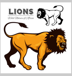 Lion king isolated animal vector
