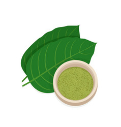 mitragyna speciosa kratom leaf with powder vector image