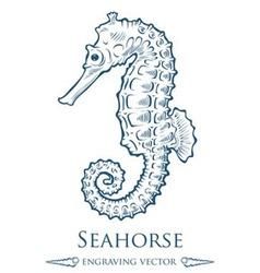 Seahorse Drawing vector