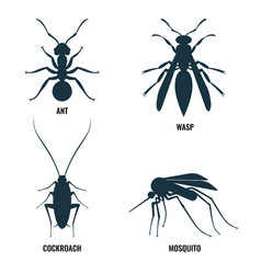 ant and wasp cockroach and mosquito vector image