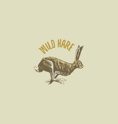 wild hare or rabbit engraved hand drawn in old vector image vector image