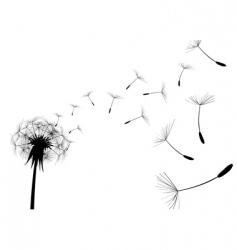 dandelion black vector image