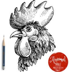 Hand drawn rooster head Sketch chicken portrait vector image