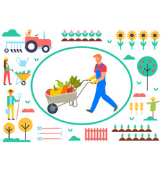 Farmer with cart and vegetables tractor sunflowers vector