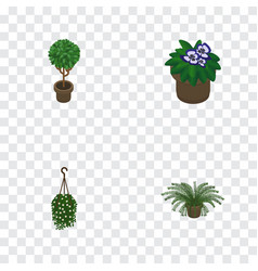 Isometric houseplant set of plant tree flowerpot vector