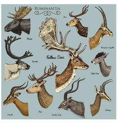 big set of horn antlers animals moose or elk with vector image vector image