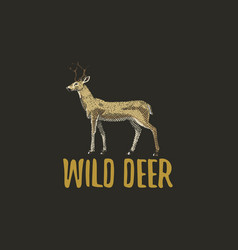 wild deer engraved hand drawn in old sketch style vector image