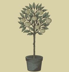 apple tree woodcut vector image vector image