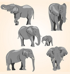 A set of african elephants vector