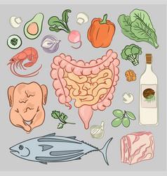 Healthy intestines diet medicine human nutrition v vector