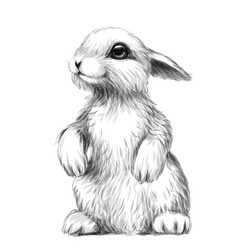 rabbit sketch artistic graphic image a rabbi vector image