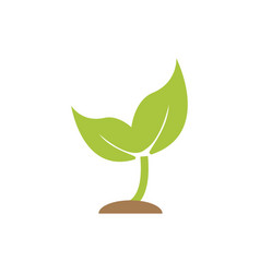 sprout plant graphic icon design template vector image