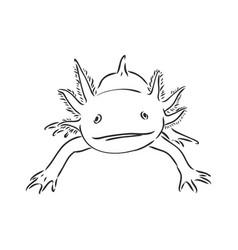 Antique engraving axolotl salamander isolated vector