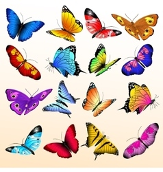 Colorful realistic butterflies big set vector