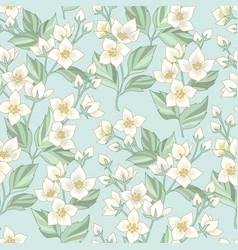 jasmine floral pattern vector image