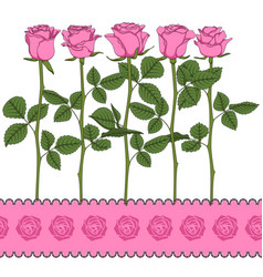 set color with pink roses vector image