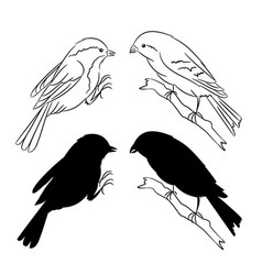 the outline and of the silhouette of the birds set vector image