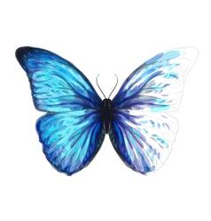 Butterfly Morpho Anaxibia vector image vector image