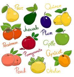juicy ripe fruits vector image