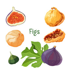 fig types of plant dried and fresh poster vector image