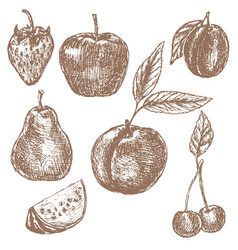 fruits brown sepia hand drawn sketch vector image