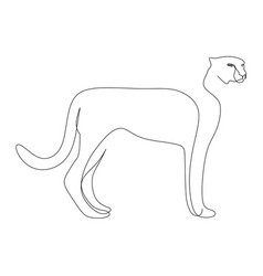 one line drawing a cheetah vector image