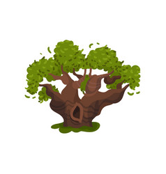 Old thick oak with a hollow vector