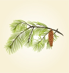 Pine branch Eastern White pine vector