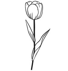 Tulip contour vector