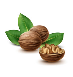 Walnuts with leaves vector