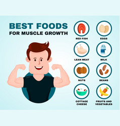 best foods for muscle growth infographic vector image vector image