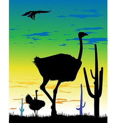 Ostrich in Steppes of Argentina vector image vector image