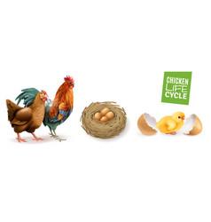 Chicken life cycle set vector