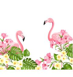 flamingo bird and plumeria flowers isolated over vector image