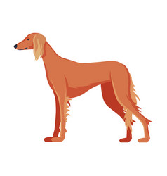 greyhound purebred dog pet animal side view vector image