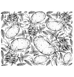 Hand drawn of fresh potatoes on a white background vector