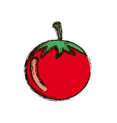 red vegetable tomato icon vector image