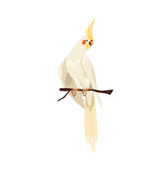 Cockatiel parrot with yellow crest and orange vector