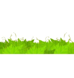 Grape leafs background vector image