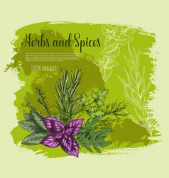 Herb and spice with fresh leaf sketch poster vector