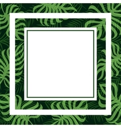 frame tropical palm leaf and monstera vector image