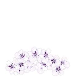 design bottom frame blossoming bouquet sakura vector image
