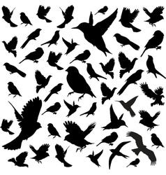 Set Birds vector image vector image