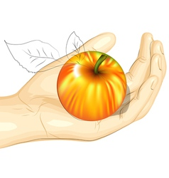 male hand and apple vector image vector image