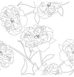peony flower on white background vector image vector image