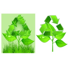 green recycle symbol on plant on white background vector image