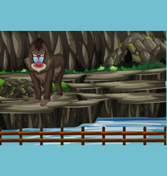 Scene with baboon in zoo vector